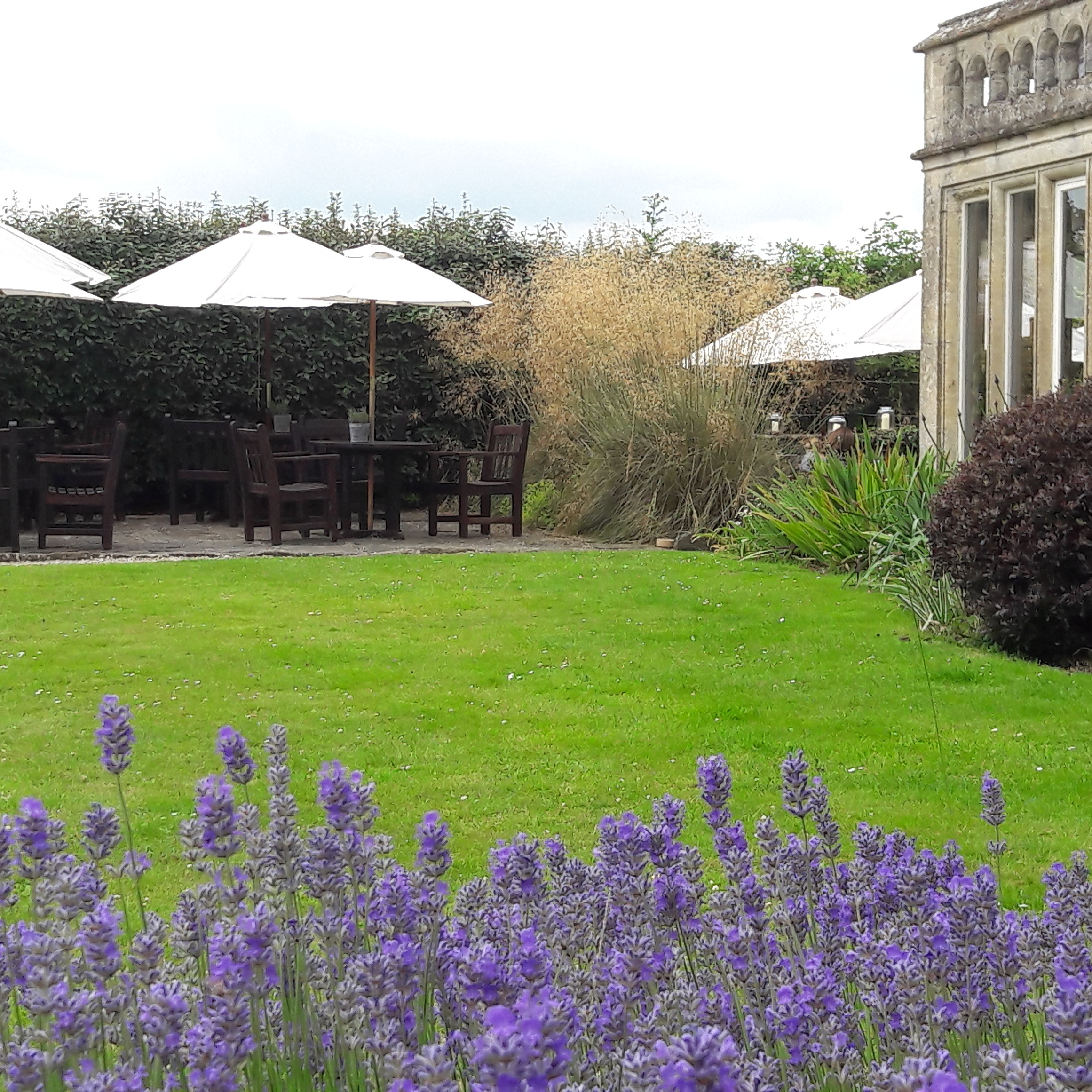 Lavender in the gardens of Woolley Grange luxury family hotel in Wiltshire