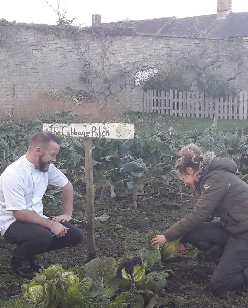 A male chef and a woman pick cabbages from a veg patch.