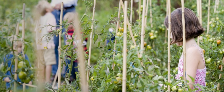 A family explore the tomato gardens at Woolley Grange luxury family hotel in Bradford on Avon