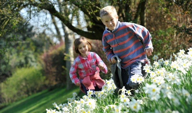 Children run and play in among flowers.
